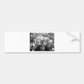 Backlits white cyclamen flowers on dark background bumper sticker