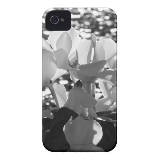 Backlits white cyclamen flowers on dark background Case-Mate iPhone 4 cases