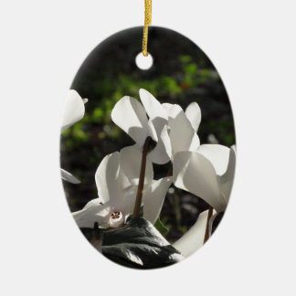 Backlits white cyclamen flowers on dark background ceramic ornament