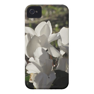Backlits white cyclamen flowers on dark background iPhone 4 cover