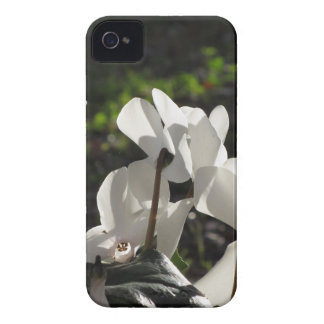 Backlits white cyclamen flowers on dark background iPhone 4 covers
