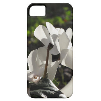 Backlits white cyclamen flowers on dark background iPhone 5 cases