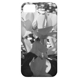 Backlits white cyclamen flowers on dark background iPhone 5 cover