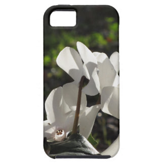 Backlits white cyclamen flowers on dark background iPhone 5 covers