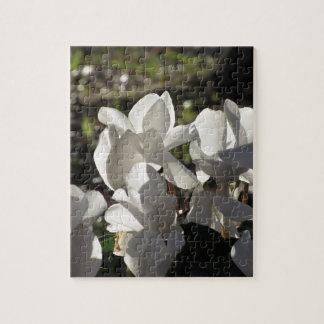Backlits white cyclamen flowers on dark background jigsaw puzzle