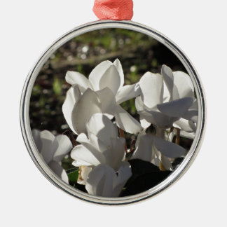 Backlits white cyclamen flowers on dark background metal ornament
