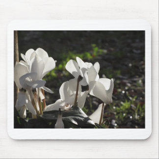 Backlits white cyclamen flowers on dark background mouse pad