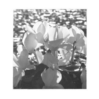 Backlits white cyclamen flowers on dark background notepad