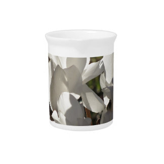 Backlits white cyclamen flowers on dark background pitcher