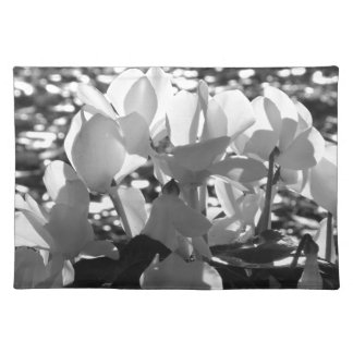 Backlits white cyclamen flowers on dark background placemat