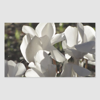 Backlits white cyclamen flowers on dark background rectangular sticker