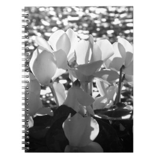 Backlits white cyclamen flowers on dark background spiral notebook