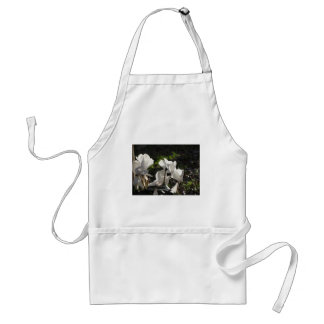 Backlits white cyclamen flowers on dark background standard apron