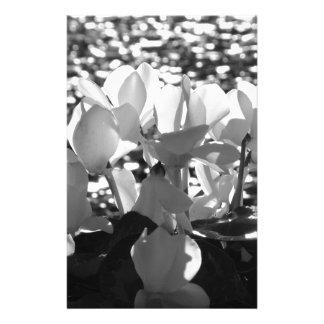 Backlits white cyclamen flowers on dark background stationery