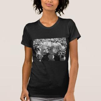 Backlits white cyclamen flowers on dark background T-Shirt