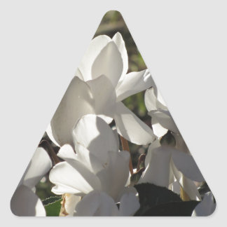 Backlits white cyclamen flowers on dark background triangle sticker