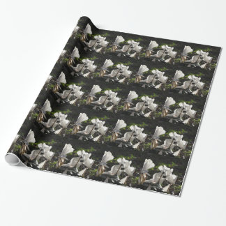Backlits white cyclamen flowers on dark background wrapping paper