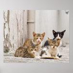 Backstreet Boys - baby cats on Ibiza street Posters