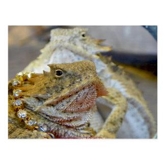 Backyard Regal Horned Lizards Postcard