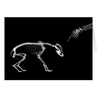 Bad Dog X-Ray Skeleton in Black & White Greeting Card