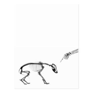 Bad Dog X-Ray Skeleton in Black White Postcard