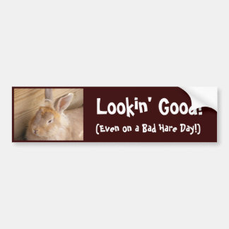 Bad Hare Day Bumper Sticker