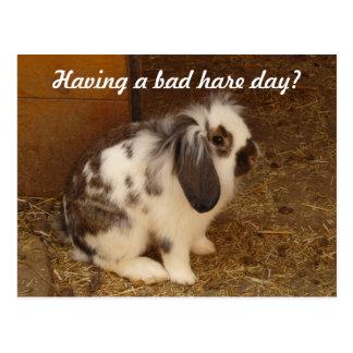 Bad Hare Day Postcard