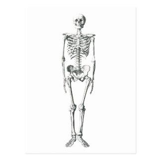 Bad to the bone postcard