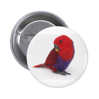 Badge pin Eclectus parrot red female pet