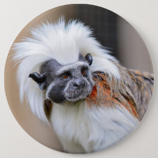 Badge with Cotton-top Tamarin monkey