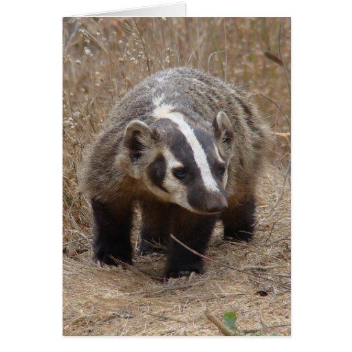 Badger Approach Card
