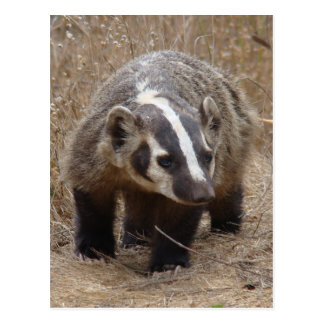 Badger Approach Postcard