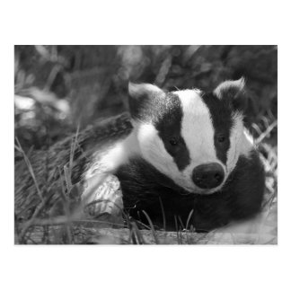 Badger in Black and White Postcard