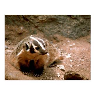 Badger Post Card