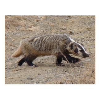 Badger Walking Postcard