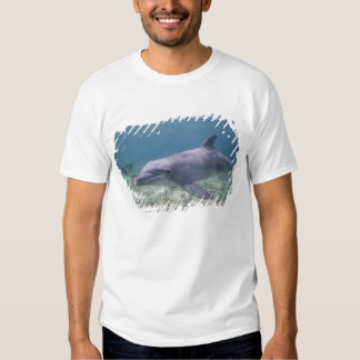 Bahamas, Grand Bahama Island, Freeport, Captive 2 Tshirts