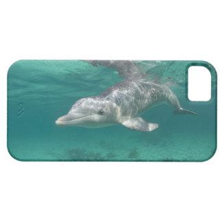 Bahamas, Grand Bahama Island, Freeport, Captive 5 Barely There iPhone 5 Case