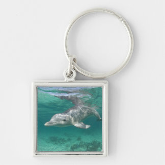 Bahamas, Grand Bahama Island, Freeport, Captive 5 Key Ring