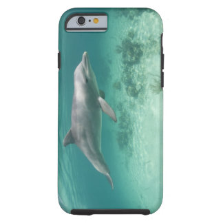Bahamas, Grand Bahama Island, Freeport, Captive 6 Tough iPhone 6 Case