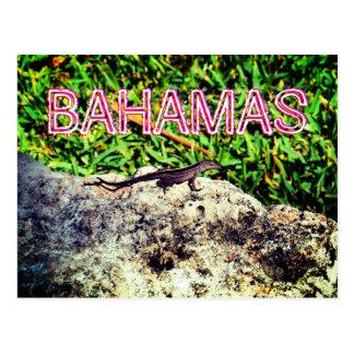 Bahamas Lizard Postcard