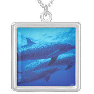 Bahamas, Spotted dophins. Square Pendant Necklace