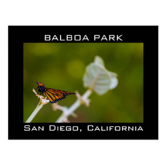 Balboa Park Monarch Butterfly on a Leaf Postcard