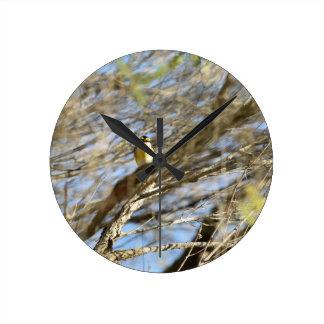 BALCK & YELLOW BIRD IN TREE QUEENSLAND AUSTRALIA WALLCLOCK