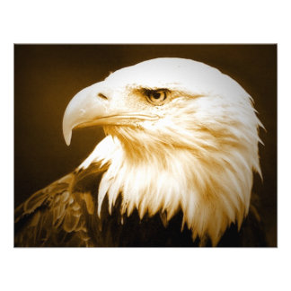 Bald American Eagle Eye Announcement