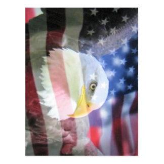 Bald american eagle & U.S.A. flag. Postcard