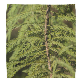 Bald Cypress Branch Bandana