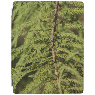Bald Cypress Branch iPad Cover