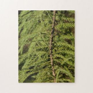 Bald Cypress Branch Jigsaw Puzzle