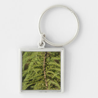 Bald Cypress Branch Key Ring