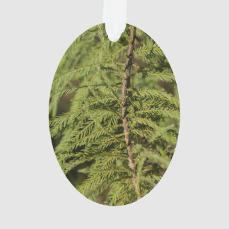 Bald Cypress Branch Ornament